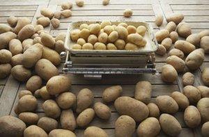 В России растёт спрос на литовские овощи